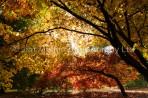 Autumn Colour (2)
