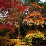 Autumn Colour (1)
