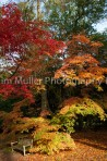 Autumn Colour (1)