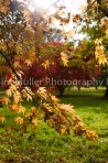 Autumn Colour (3)
