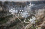 Frost (1)